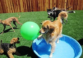 pet daycare sun valley